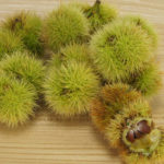 Ein Haufen unreifer Maronen. Eine geöffnete zeigt drei mickrige Früchte.